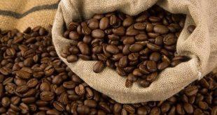 صادرات قهوه عربیکا