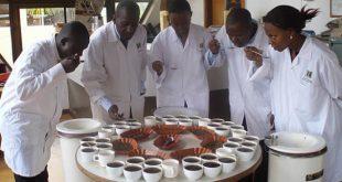 بازار قهوه robusta