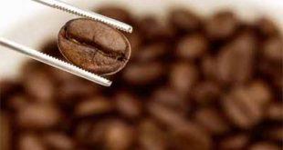 انواع قهوه اسپشیالتی