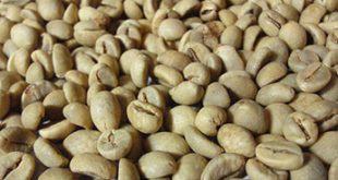 فروش قهوه اندونزی