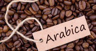 قیمت دانه قهوه خام عربیکا تهران