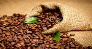 قیمت انواع قهوه عربیکا اتیوپی