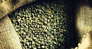 واردات دانه قهوه سبز عربیکا چین